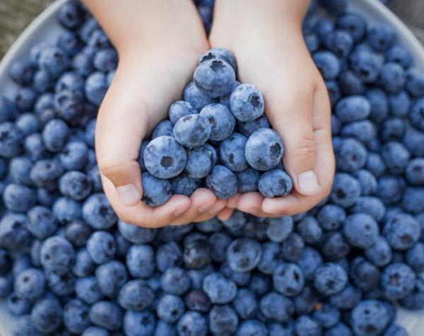 DG - Holding blueberries