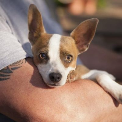 Health Check: What Bugs can you Catch from your Pets?